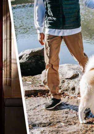 Хозяин показал лайфхак, как выгуливать пса, не выходя из дома. У кота Шрёдингера появился лающий конкурент