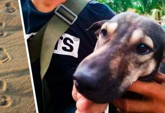 Байкер нашёл истошно лающую собаку и не зря пошёл за ней. Увидев, к кому привёл пёс, парень побежал в полицию