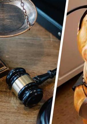Бульдог сбежал от хозяина, а вернулся питбулем с иском в суд для владельца. Собака та же — но судью не убедить