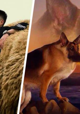 Хозяин показал своего пса и доказал: сутулая собака — не мем, а диагноз. Но зрителям всё равно — они влюблены