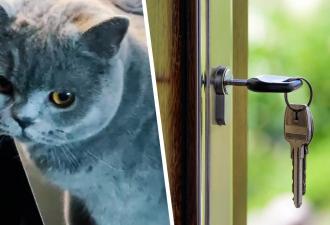 Хозяйка вернула в дом сбежавшую кошку, но вакантное место занял двойник. И это лучший сбой Матрицы, верят люди
