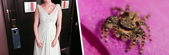 Женщина рыдала от постоянных нападений пауков. Стало хуже, когда она поняла: её троллит собственный мозг