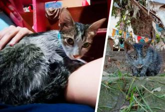 Девушка подобрала кошку, а та оказалась Мистик из «Людей Икс». Через пару дней она мимикрировала под хозяйку