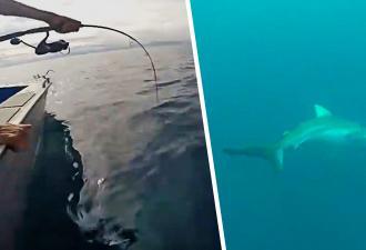 Приятели рыбачили и узнали, как можно словить леща там, где он не водится. Стоит только разозлить акулу