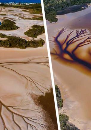 Мужчина сфотографировал озеро и стал знаменит. Чайное дерево нарисовало автопортрет, но ему премию не выпишут