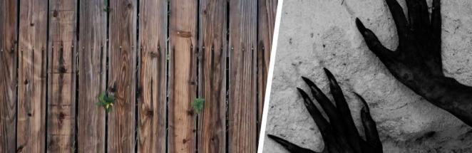 Женщина вышла во двор и заметила, что забор ожил. Самым удивительным в этой ситуации было другое — её реакция