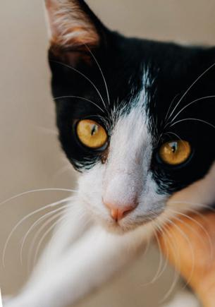 Шеф-повар думал, что спас грустного котёнка от холода. Только от ветеринара он узнал, кого нашёл на самом деле