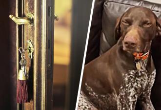 Хозяйка пришла домой и узнала, что делает её пёс в одиночестве. К его криминальной натуре она была не готова