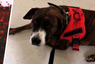 Собака взбунтовалась на прогулке и стала выгуливать хозяйку. Но сбой женщину не напугал, ведь он спас ей жизнь