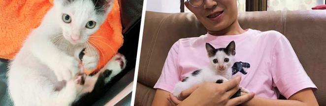 Хозяин показал фото кота-обжоры спустя год, но сам стал объектом шуток. Ведь парень, похоже, ел тот же корм