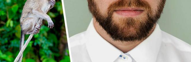 Борода «обезьяний хвост» — модный тренд, который захочется развидеть. И за него мужчин уже жёстко высмеяли