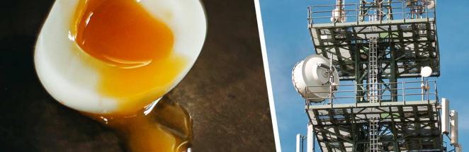 Парень разбил куриное яйцо, а в нём – послание. Это цифра, и она точно нравится Биллу Гейтсу