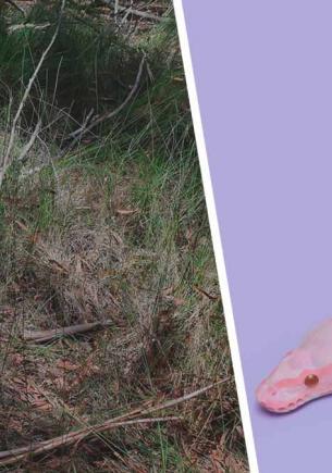 Специалисты показали фото змеи и озадачили людей. Найти рептилию сложно: в каждой палке скрыта опасность