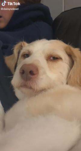 Девушка показала на видео собаку, а люди видят в нём человека. Кажется, он застрял в теле пёселя