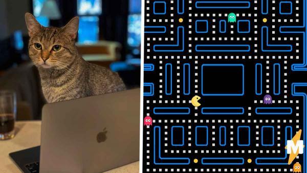 Хозяин кота показал, как апгрейдил место для питомца (зря). Теперь люди уверены: котю съест Альф или Пакман