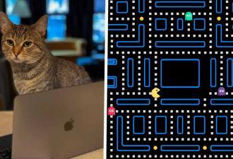 Хозяин коти показал, как апгрейдил место для питомца (зря). Теперь люди уверены: котом закусывает Пакман
