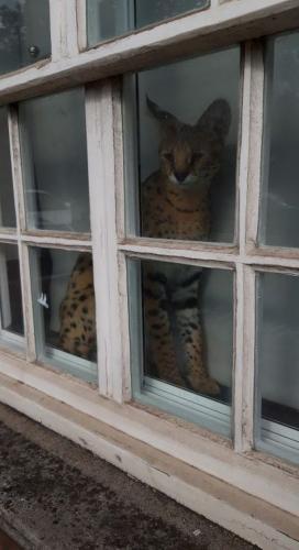 Парень купил кота и чуть не остался без дома. Он принял ушки питомца совсем за другое животное - и поплатился