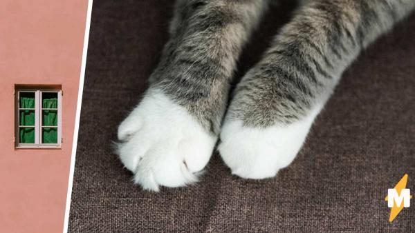 Британец купил кота из России и чуть не остался без дома. Он не узнал в питомце другое животное - и поплатился