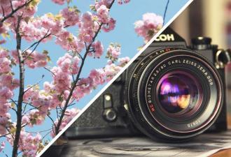 Фотограф заснял цветущую сакуру, и у него вышел кадр из аниме. Но главным героем оказалась совсем не вишня