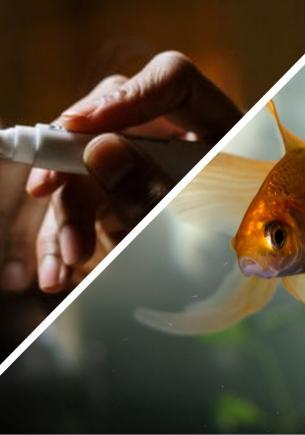 Хозяйка захотела поиграть с рыбкой, и та отстояла честь вида. Чешуйчатая победила кожаную в крестики-нолики