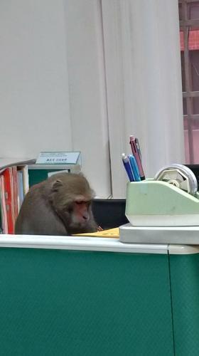 Работник зашёл в универ на каникулах и понял: Дарвин был прав. Пока все отдыхают, эволюция сворачивает не туда