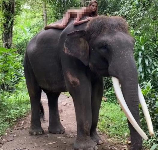 Модель Алеся Кафельникова сделала фото со слоном, но словила хейт. Люди считают, что с животным поступили плохо