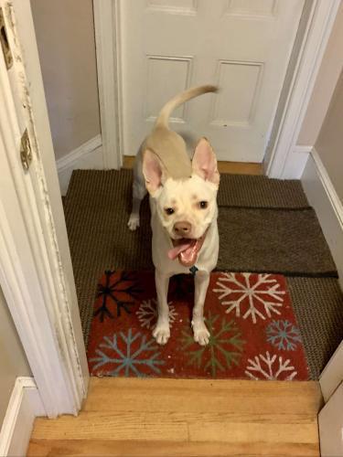 Собака выглядит так, будто ей нужны не один, а сразу два дома. Смотрите сами: мордашка пёси - это и Инь, и Ян
