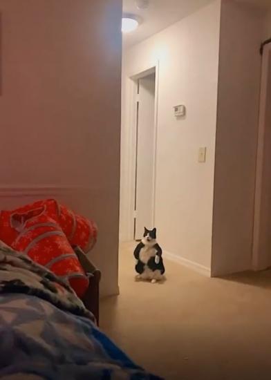 Девушка показала, как сидит её жирный котик и разозлила