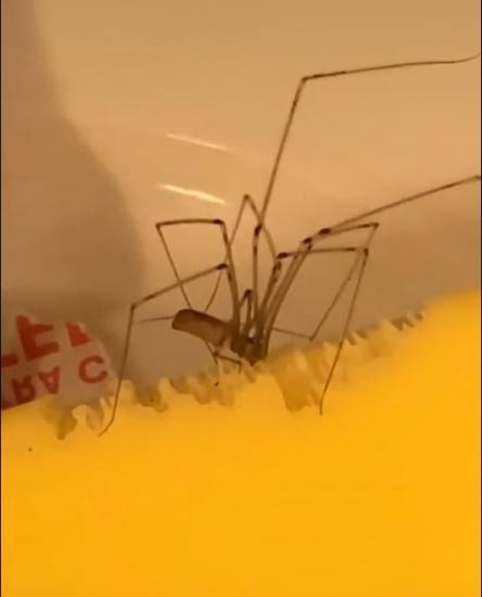 Парень и павук