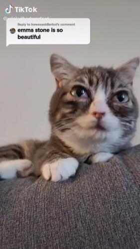 """Хозяйка показала кошку с большими глазами и сломала людей. Они видят в ней Чешира из """"Алисы в стране чудес"""""""