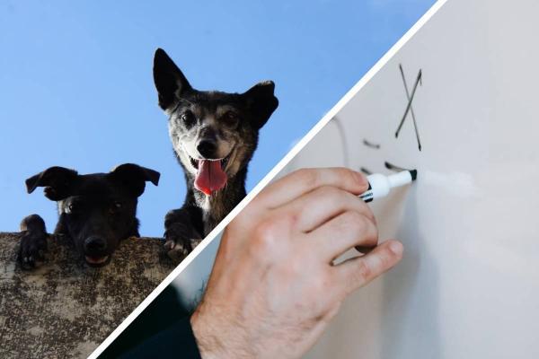 Математики вычислили самую красивую породу собак с помощью золотого сечения. Похоже, Круэлла знала, что делала