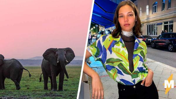 Модель Алеся Кафельникова сделала фото со слоном, но словила хейт. Люди считают: с животным поступили жестоко