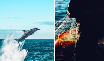 Дельфин выплыл на пляж, и рыбаки зря его спасли. Кто же знал: назад в воду ему нельзя, но дело не в эволюции