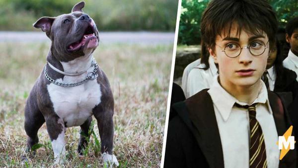 Парень показал собаку на фото и заставил людей поверить в магию. Ведь на снимке они видят Гарри Поттера