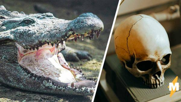 Пловец победил в схватке с боссом крокодилов. Увидев раны, врач понял: парня спасла его уникальная голова