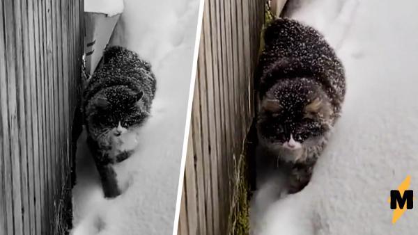 Кот плывёт домой по снегу и бьёт сердца иностранцев. Они его жалеют, а наши знают: русский Барсик крепче стали
