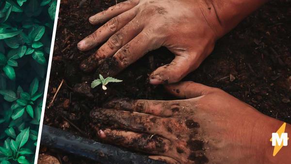 Садовник посадил на пустоши дерево и не смог остановиться. Через 15 лет серое поле превратилось в филиал Эдема