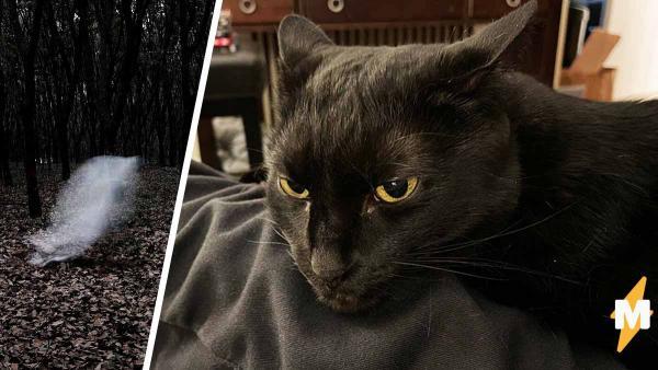 Вы когда-нибудь видели прозрачную кошку? Она существует - и даже Шрёдингер в случае фото с ней ни при чём