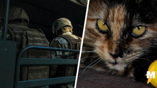 Суровая российская кошка решила проверить свою шёрстку на выносливость и проехала