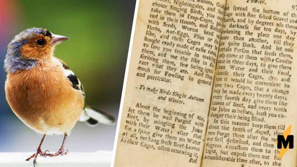 Антиквары нашли справочник садовода 1704 года, и птицы его не оценят. В нём  инструкция для пернатого караоке