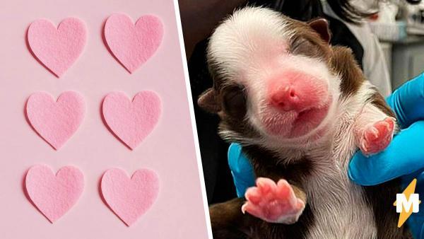 Ветеринары увидели щенка и узнали, кого не хватало в Людях Икс. Шести лапам злодеям нечего противопоставить