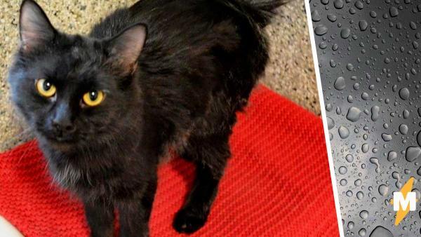 Фотограф показал кошку в приюте, и снимок говорит громче слов. Ведь в нём вся боль одиноких животных