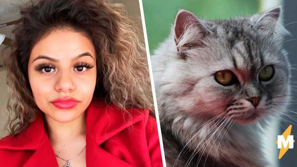 Девушка побрила персидского кота и нарвалась на хейт. Теперь он мемный боксёр, и люди видят в этом абьюз