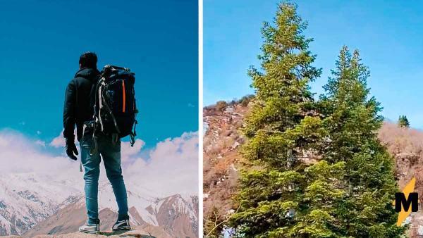 Турист любовался деревом и чуть не стал обедом. Присмотревшись к веткам, он понял: за ним наблюдает хищник