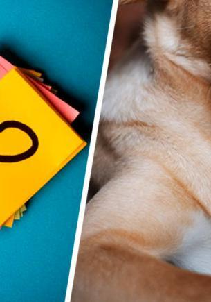Блогер показал пса-метиса и сломал собачников. У них много вопросов, ведь питомец — лабрадор в теле таксы