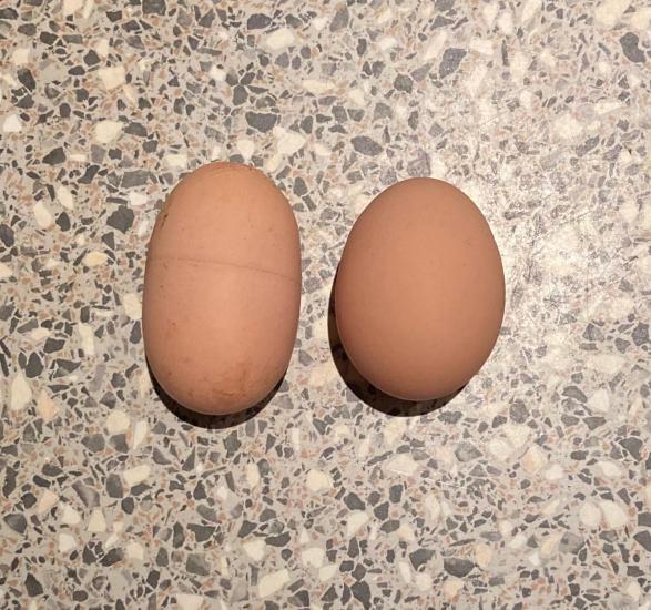 Реддитор показал, какое яйцо снесла курица. Не простое и даже не золотое, ведь это настоящий «Киндер-сюрприз»