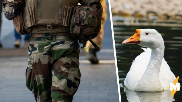 Солдаты проводили учения, но им помешал необычный противник. Ещё бы: к встрече с таким врагом их не готовили