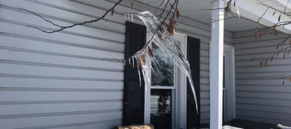Хозяйка фермы выглянула в окно и увидела гигантскую колибри. Зимой. В сбое матрицы виноват ветер и потепление