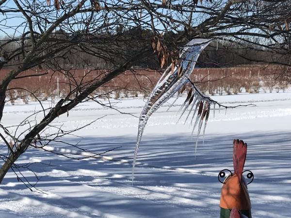 Бабуля выглянула в окно и увидела гигантскую колибри. Зимой.