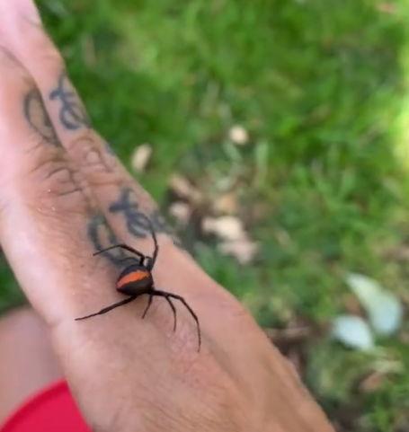 Смельчак взял на руки паука на видео и спросил у зрителей, что за порода. Когда узнал, бежать было уже поздно